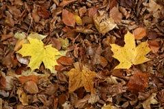 De herfst gaat ter plaatse weg Royalty-vrije Stock Afbeeldingen