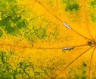 De herfst gaat zeer dicht weg Royalty-vrije Stock Fotografie