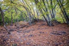 De herfst in Gdynia Royalty-vrije Stock Afbeeldingen