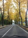 De herfst in geel stock foto's