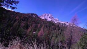 De herfst gekleurd bos in het midden van de bergen in de Alpen stock video