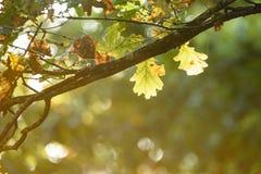 de herfst gekleurd van boombladeren patroon als achtergrond door de rivier Stock Afbeelding
