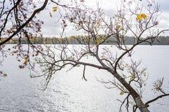 de herfst gekleurd van boomtakken patroon als achtergrond door de rivier Stock Foto's