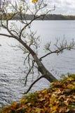 de herfst gekleurd van boomtakken patroon als achtergrond door de rivier Royalty-vrije Stock Foto's