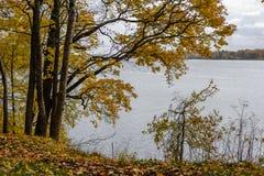 de herfst gekleurde bomen in het park Royalty-vrije Stock Foto's