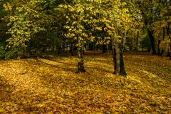 de herfst gekleurde bomen in het park Royalty-vrije Stock Afbeelding