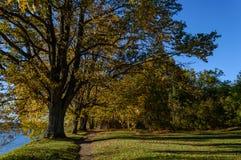 de herfst gekleurde bomen in het park Stock Fotografie