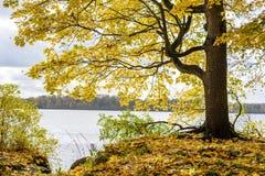 de herfst gekleurde bomen in het park Royalty-vrije Stock Foto