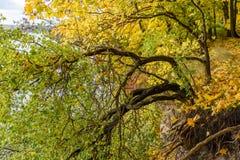 de herfst gekleurde bomen in het park Stock Afbeelding