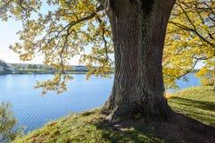 de herfst gekleurde bomen in het park Stock Foto