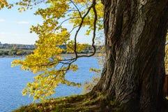 de herfst gekleurde bomen in het park Royalty-vrije Stock Afbeeldingen