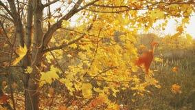 De herfst is gekomen stock videobeelden