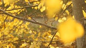 De herfst is gekomen stock video