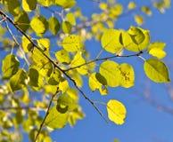 De herfst is gekomen. Stock Afbeeldingen