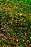 De herfst gele bladeren op een gras stock fotografie