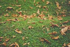 De herfst gele bladeren op groen gras royalty-vrije stock foto
