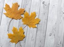 De herfst gele bladeren op lichte houten achtergrond stock afbeelding