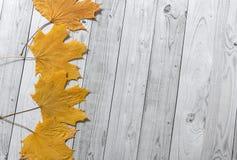 De herfst gele bladeren op lichte houten achtergrond stock foto's