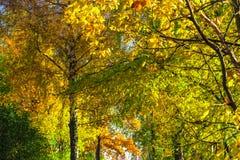 De herfst gele bomen royalty-vrije stock fotografie