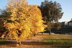 De herfst gele en groene bomen in Florence, Italië en rivier op de achterscène royalty-vrije stock afbeelding