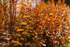de herfst gele en rode bladeren tegen de blauwe hemel Stock Fotografie