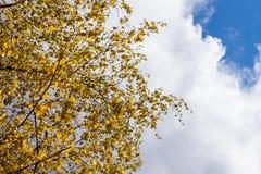 de herfst gele en rode bladeren tegen de blauwe hemel Stock Afbeeldingen