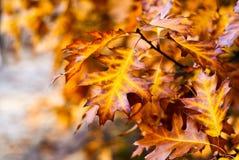De herfst gele threes royalty-vrije stock afbeeldingen