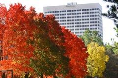 De herfst in Georgië stock afbeelding