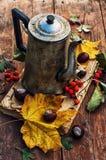 De herfst gevallen bladeren Stock Foto