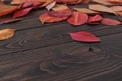De herfst gevallen bladeren op een donkere houten oppervlakte Royalty-vrije Stock Fotografie