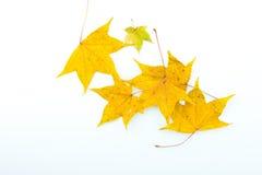 De herfst gevallen kleurenbladeren Stock Afbeelding