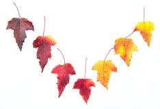 De herfst gevallen kleurenbladeren Royalty-vrije Stock Foto's