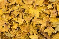 De herfst gevallen kleurenbladeren Royalty-vrije Stock Afbeeldingen