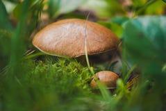 De herfst gladde hefbomen stock fotografie