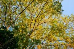 De herfst gouden bladeren royalty-vrije stock afbeelding