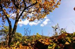 De herfst gouden Vietnam stock afbeeldingen