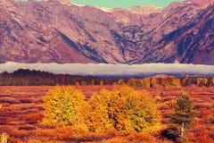 De herfst in Grand Teton Royalty-vrije Stock Afbeeldingen