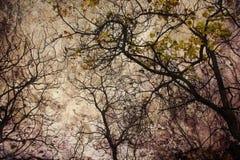 De herfst grunge Stock Afbeeldingen