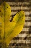 De herfst grunge Stock Fotografie