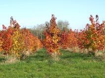 De herfst heeft het landschap geschilderd Stock Afbeelding