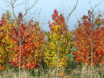 De herfst heeft het landschap geschilderd Royalty-vrije Stock Fotografie