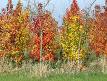 De herfst heeft het landschap geschilderd Royalty-vrije Stock Afbeelding