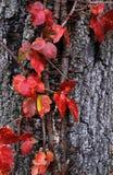De herfst in Hempstead Royalty-vrije Stock Afbeeldingen