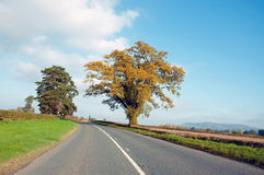De herfst in Herefordshire Royalty-vrije Stock Fotografie