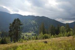 De herfst in het bergbos Stock Foto's
