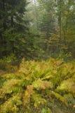 De herfst, het Blauwe Brede rijweg met mooi aangelegd landschap van de Rand, NC Royalty-vrije Stock Foto's