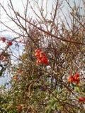 De herfst in het bos Royalty-vrije Stock Foto's
