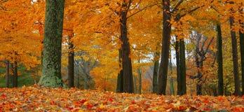 De herfst in het bos Stock Foto