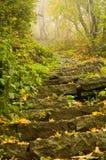 De herfst in het bos Royalty-vrije Stock Foto