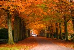 De herfst in het bos stock afbeeldingen